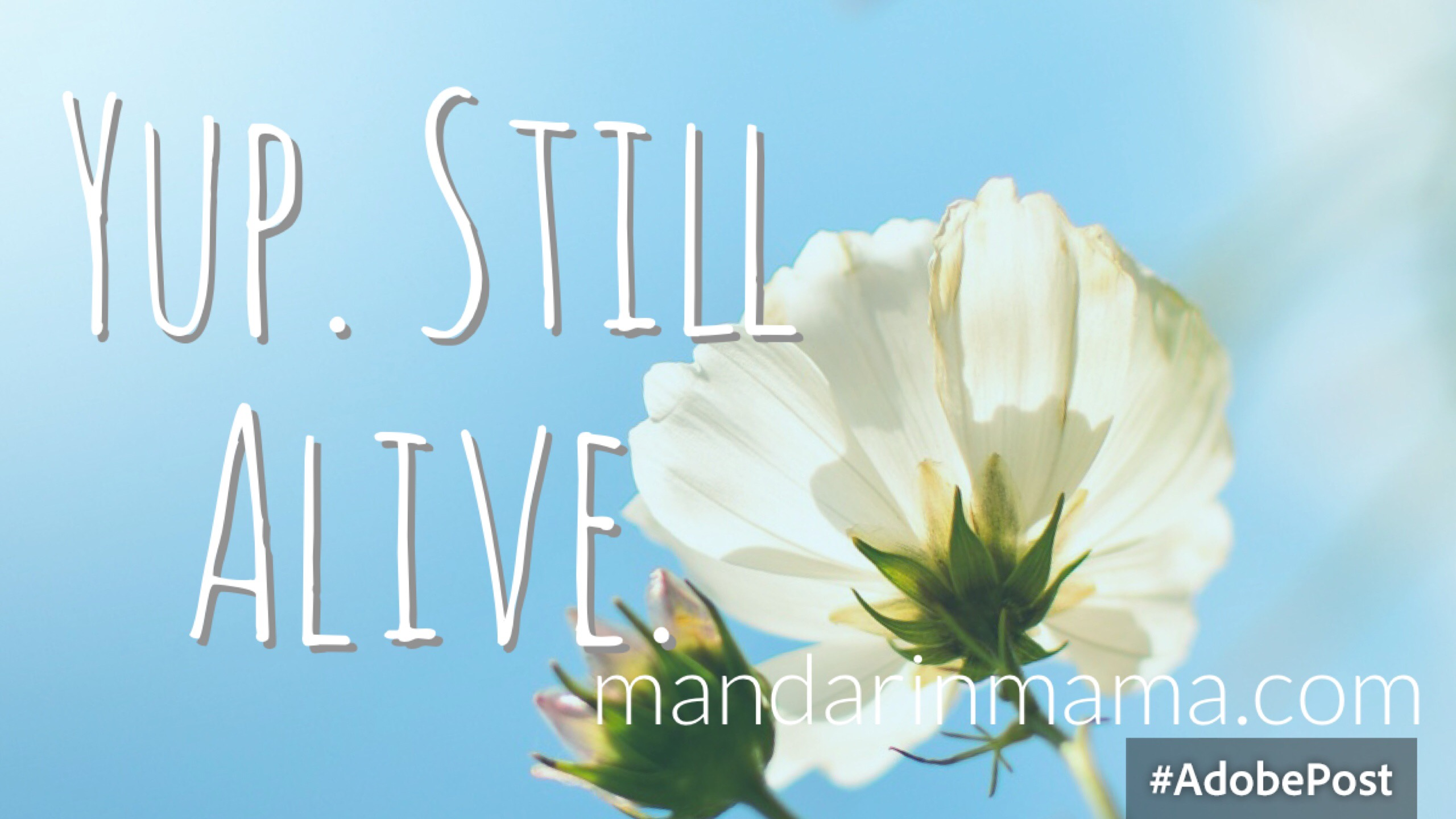 Yup. Still Alive.
