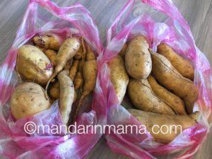 The 地瓜 (di4 gua/sweet potatoes) Gamera and Glow Worm picked.